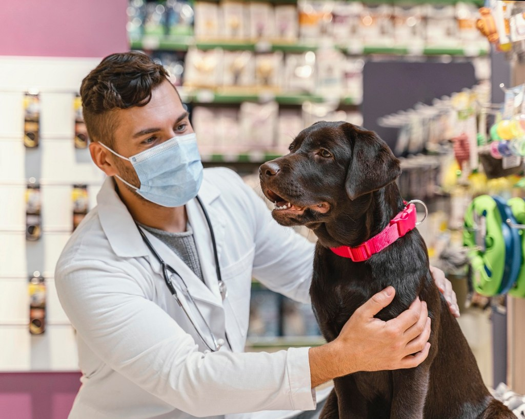 How Lakeshore Vet and Pet Lodge Vets Help Pets Allergies in Mandeville.
