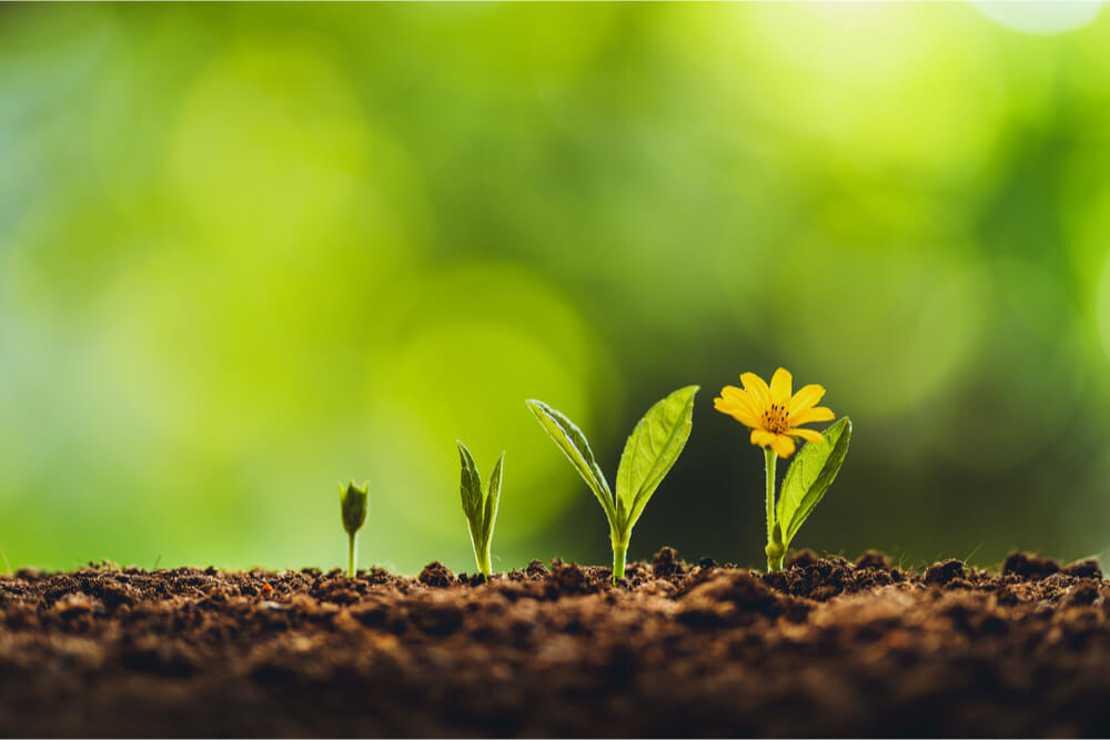 How Spring Offers Opportunity for Self-Growth and Change