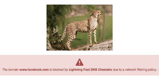 lightning fast DNS