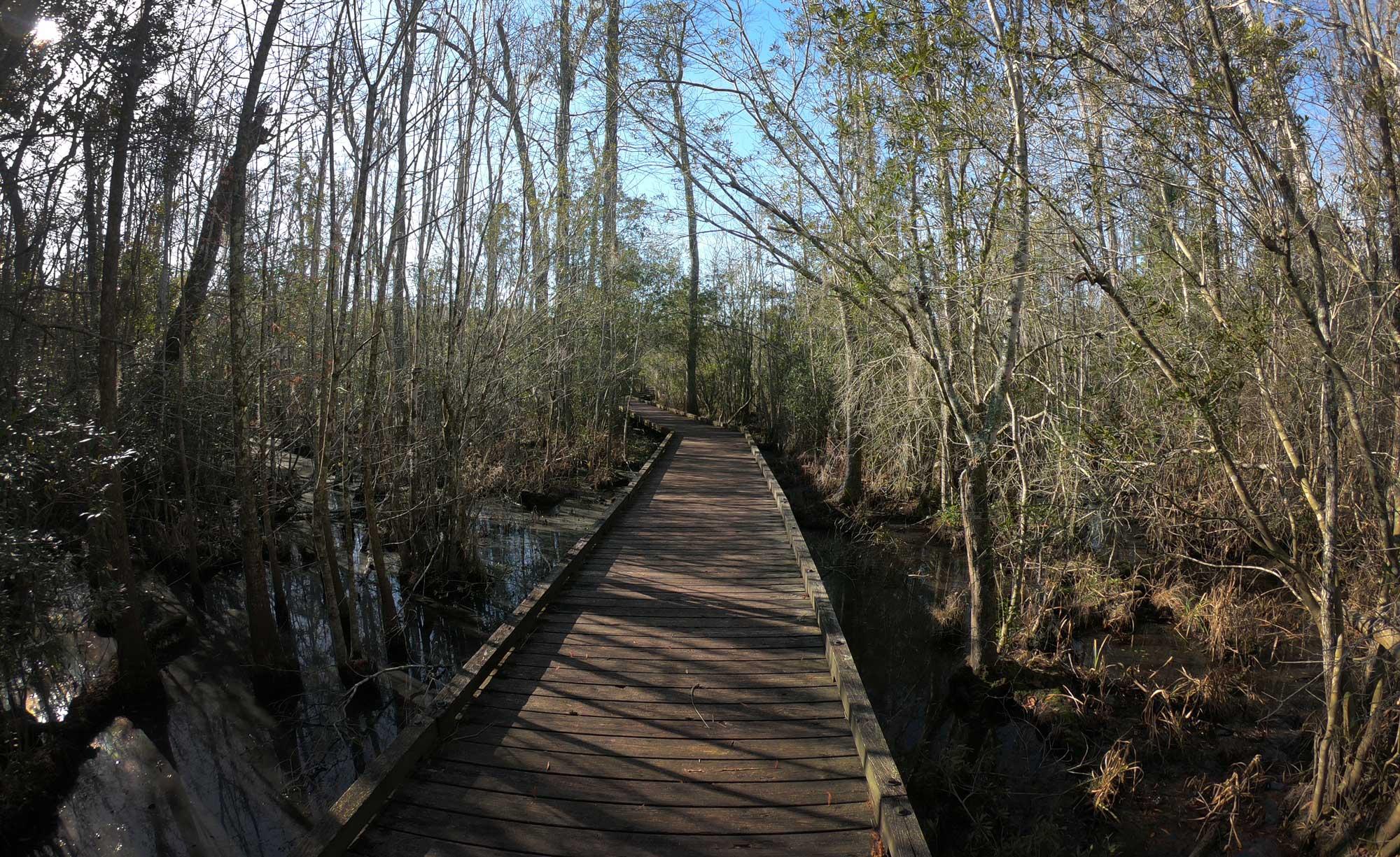 Goose Creek State Park Palmetto Boardwalk through wetlands in North Carolina