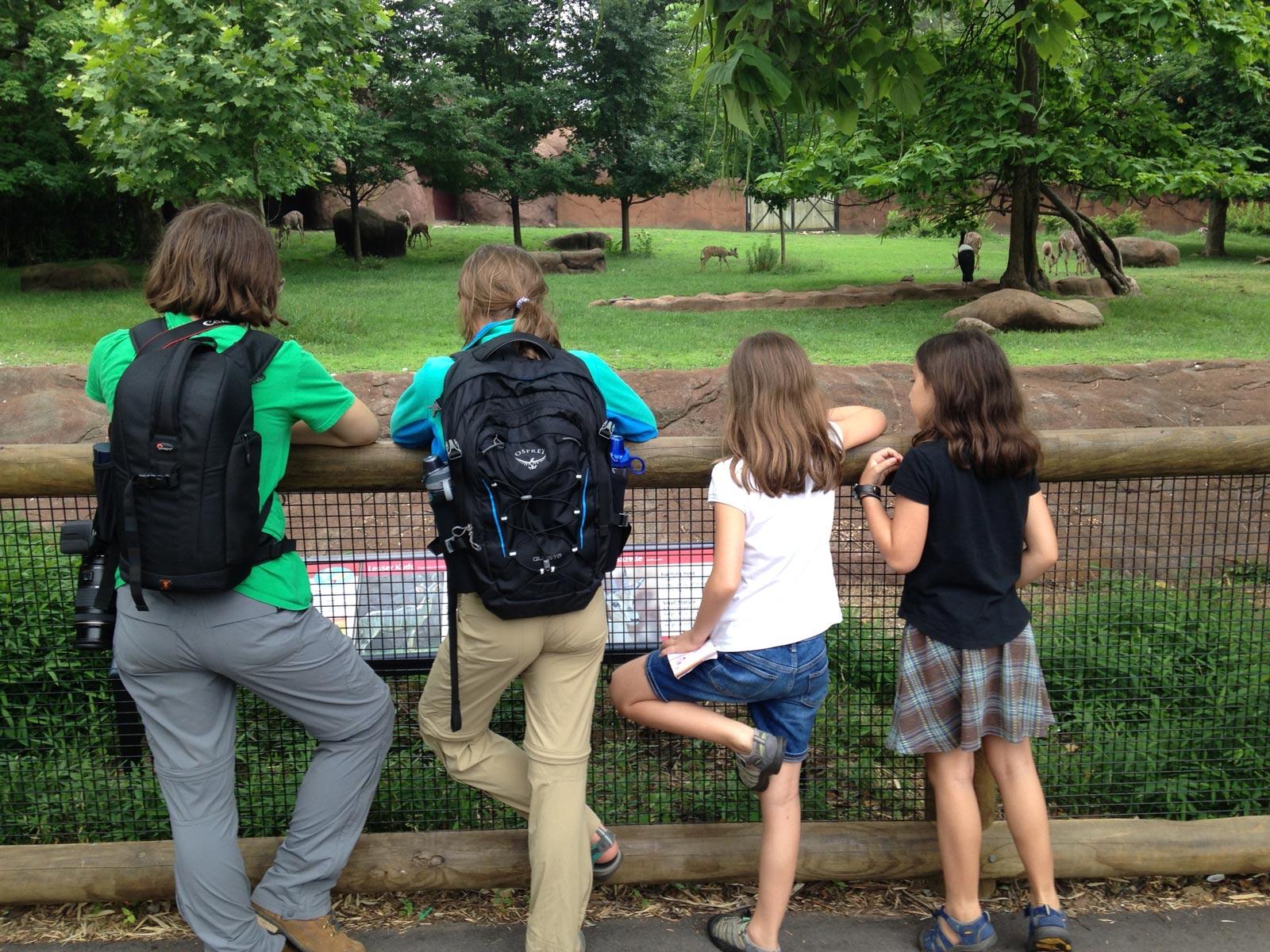 Four girls looking at an exhibit at Saint Louis Zoo in Saint Louis, Missouri