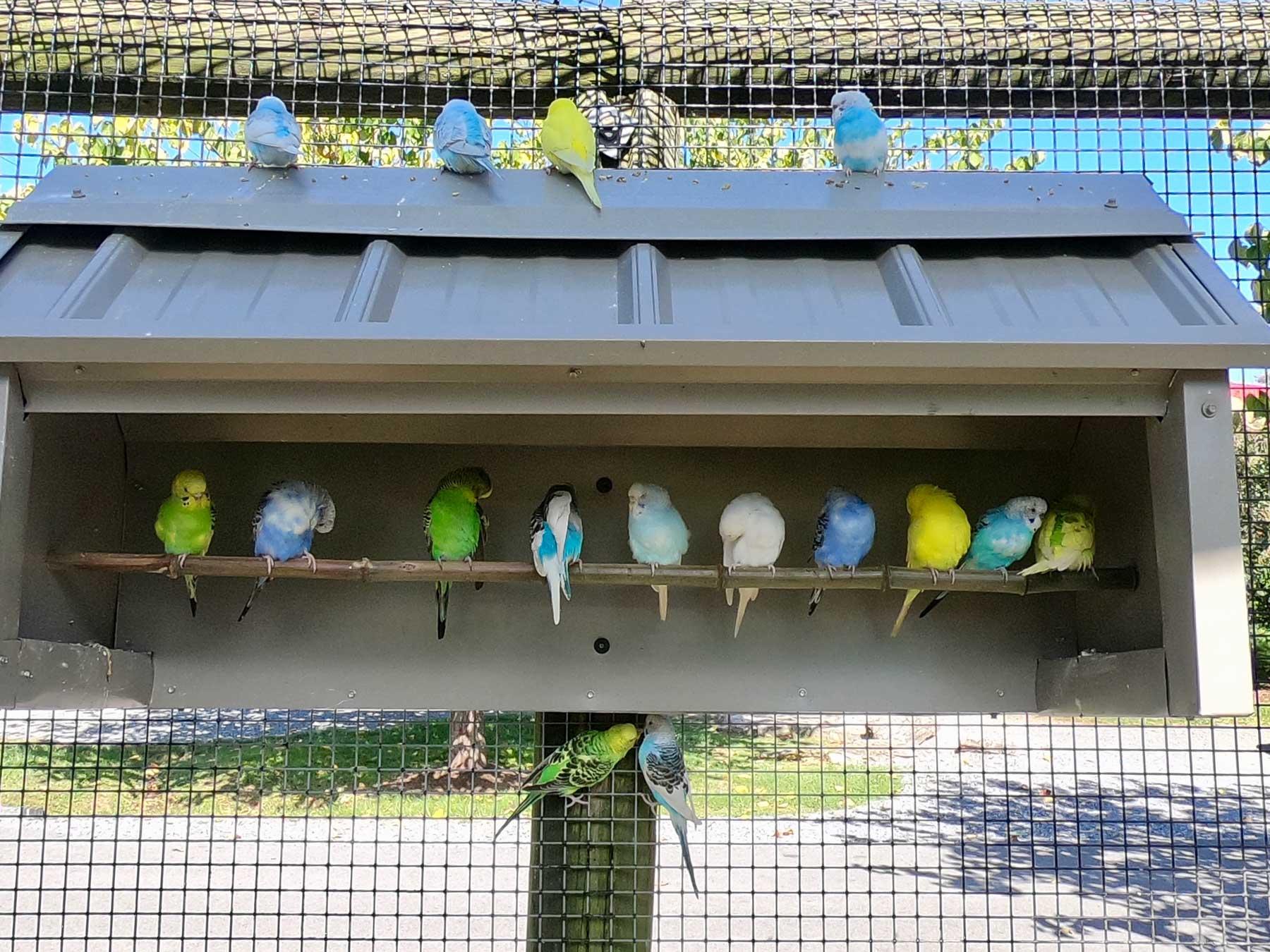 Feeding colorful array of parakeets at Virginia Safari Park, Natural Bridge, VA