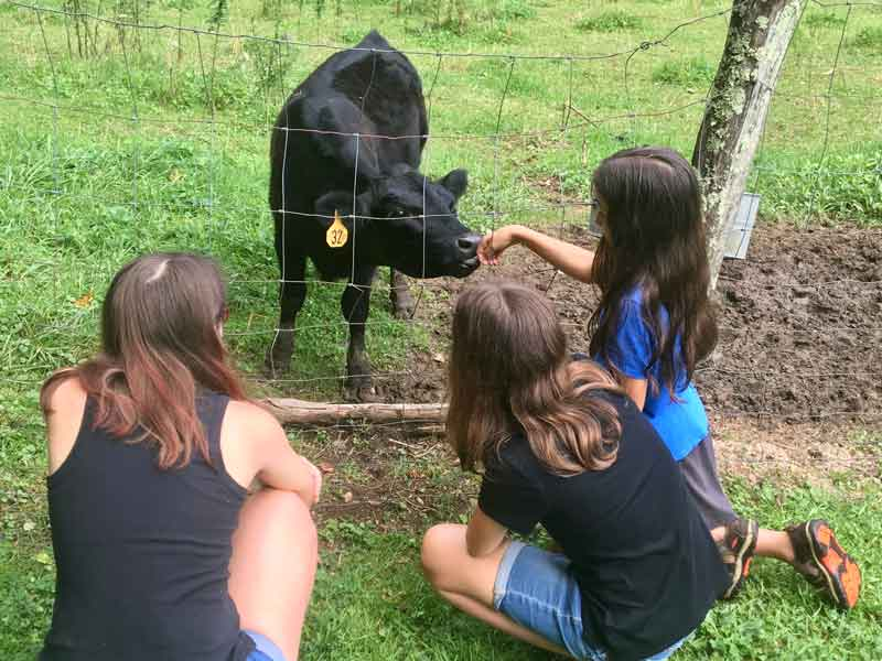 Teens petting a black cow on the Miller Farmstead in Roan Mountain State Park, Tennessee
