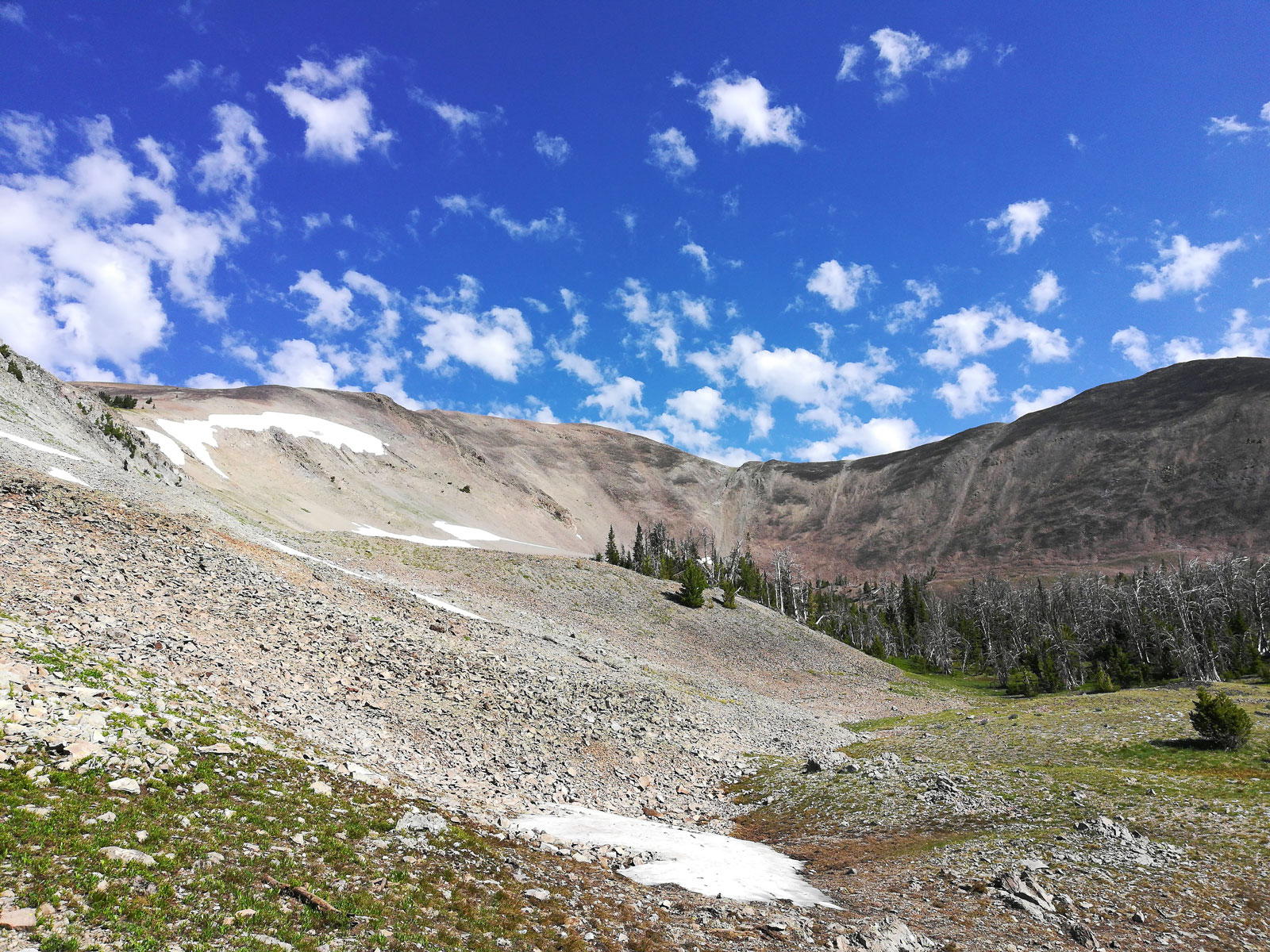 Tree line on the trail to Avalanche Peak in Wyoming's Yellowstone National Park
