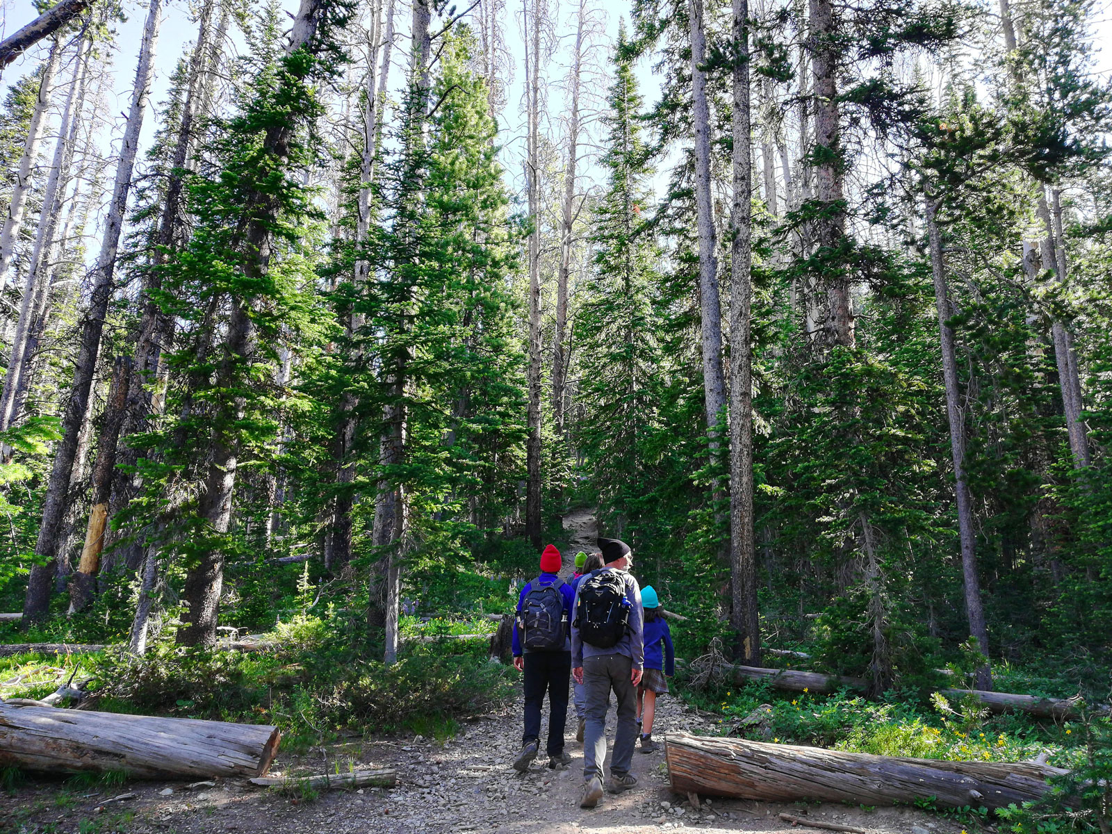 Family at the trailhead of the Avalanche Peak Trail in Yellowstone National Park