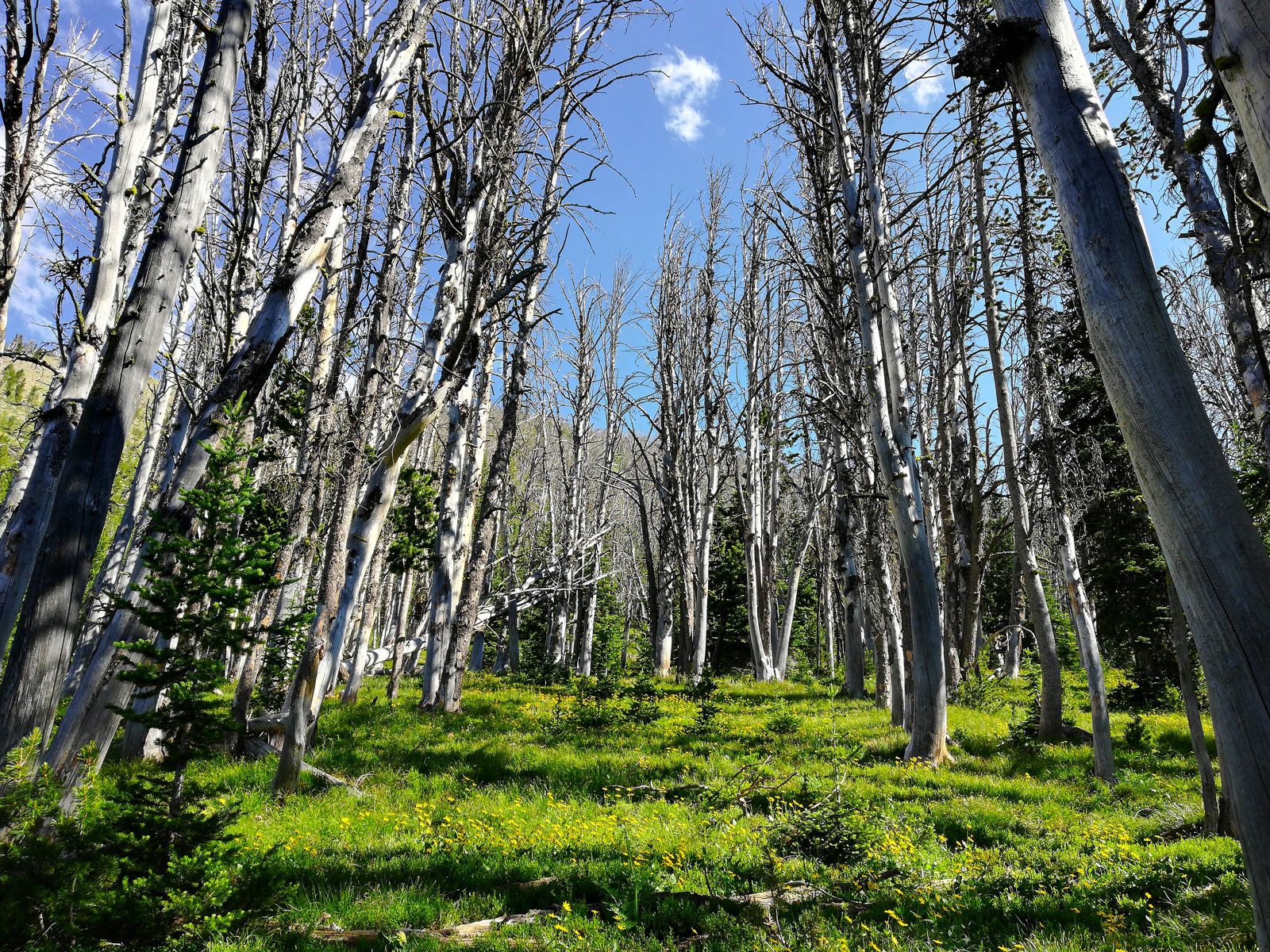 Alpine basin in the trail leading to Avalanche Peak in Yellowstone National Park