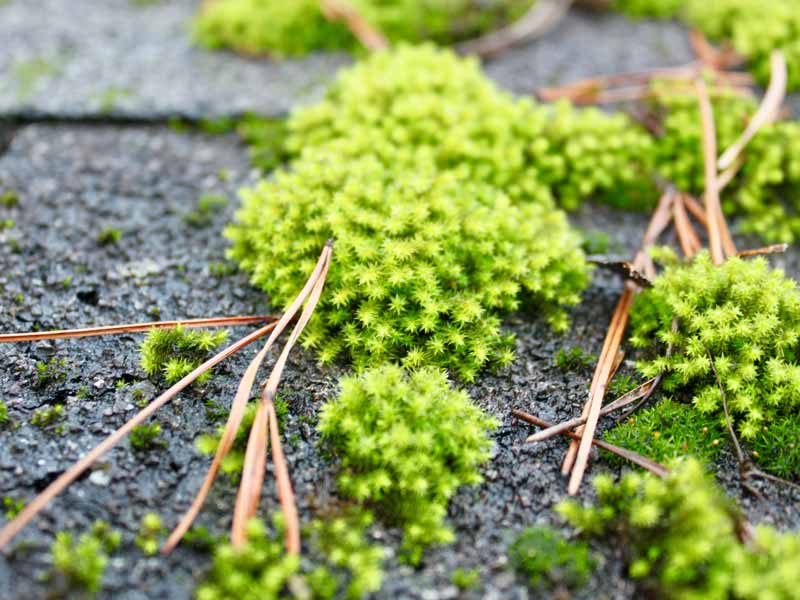 Brilliant green moss on roof of restrooms in Morrow Mountain State Park, North Carolina
