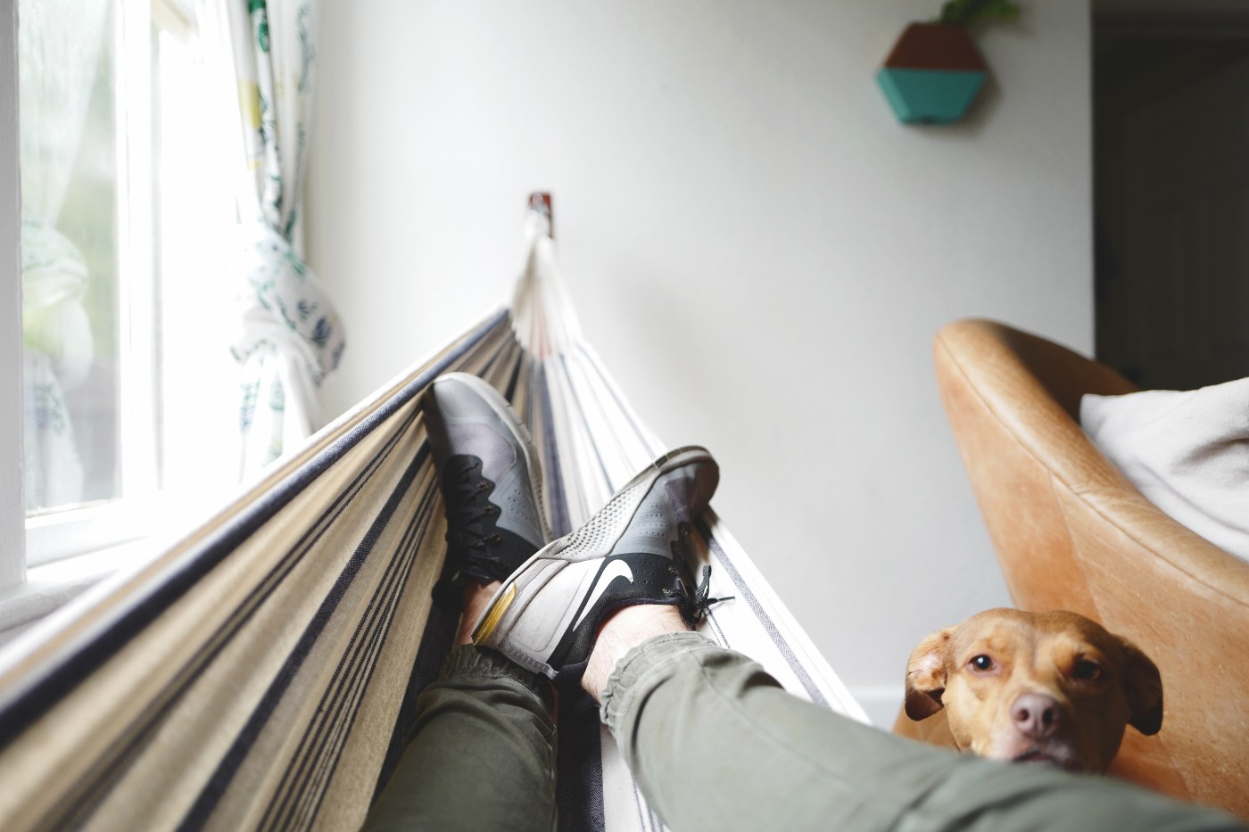 a person resting in a hammock next to a dog