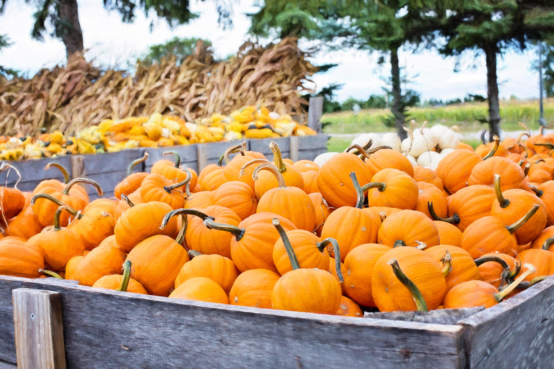 pumpkin-season|pumpkin muffin|pumpkin-muffin|pumpkin-muffin