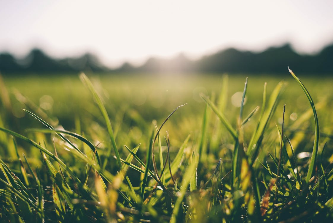 the grass is greener|the-grass-is-greener