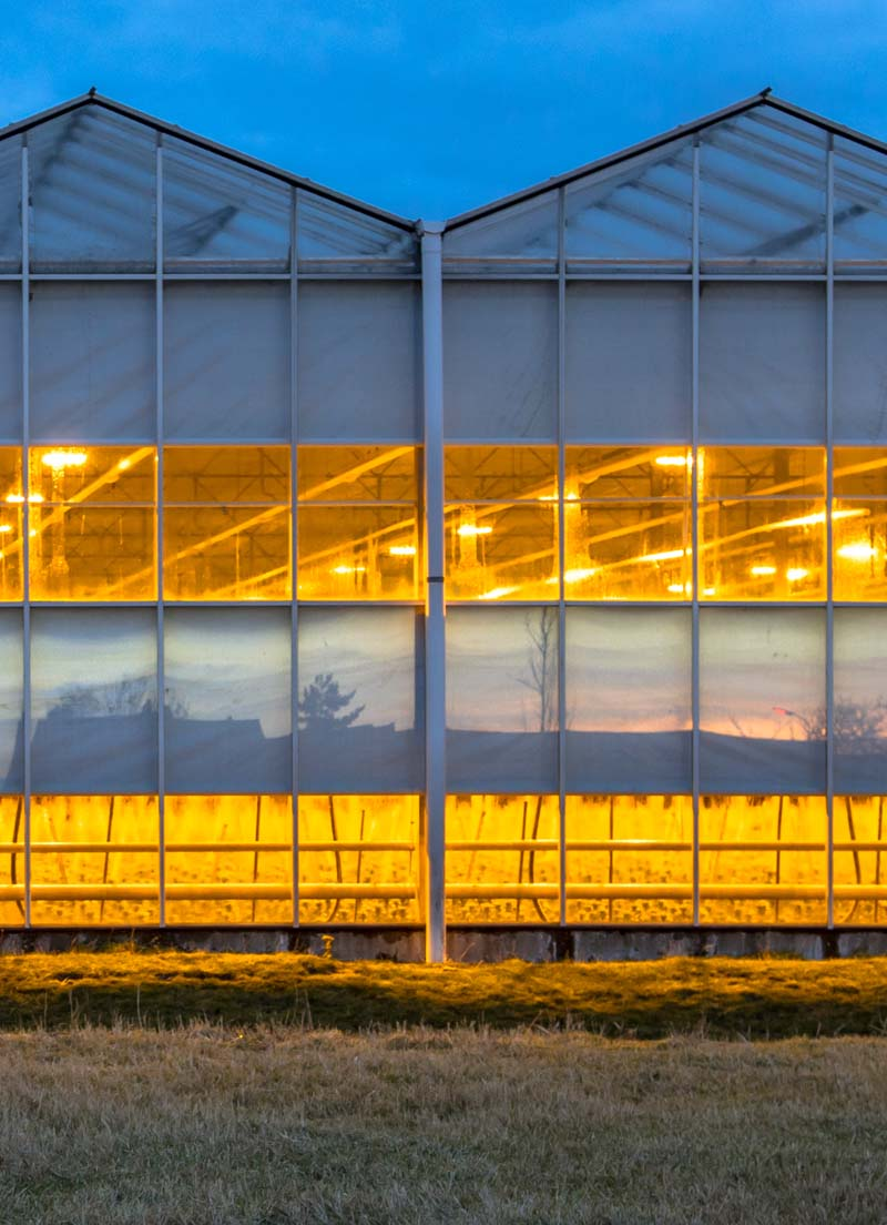 Image showing a Green House with lights on at dusk