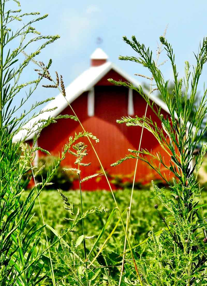 Bill Glick Barn Painting Image showing a out of focus Red heritage barn through a small field