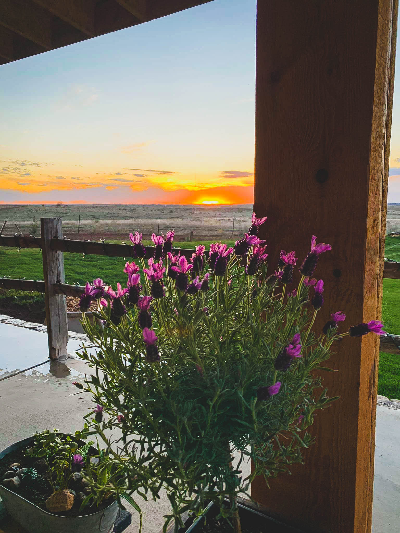 Flowers on the Patio - The Barn on Willow Creek