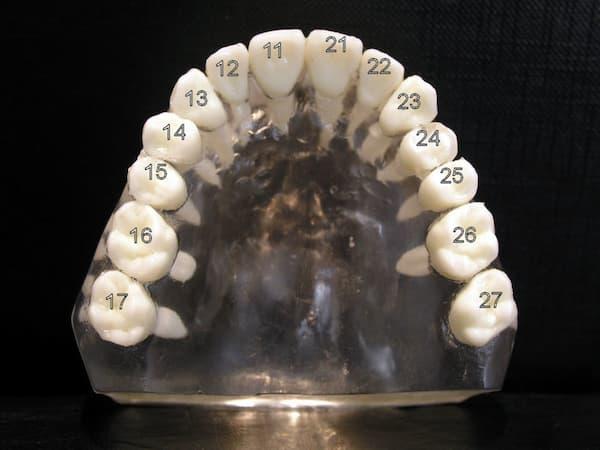 Bezifferung der Zähne im Oberkiefer