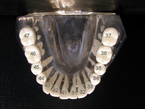 Bezifferung der Zähne im Unterkiefer