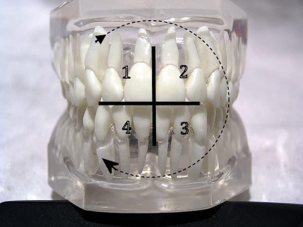 Zahn-Modell mit eingezeichneten Quadranten