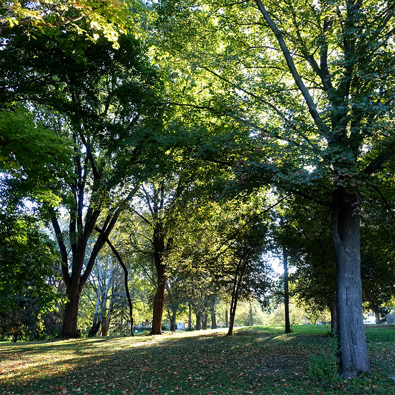 Shaded, tree-lined expanse on San Damiano