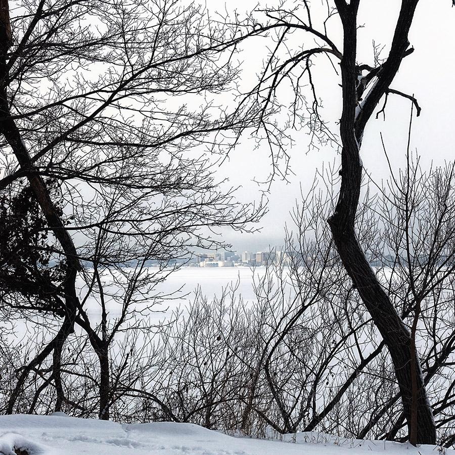 Madison skyline through trees in winter