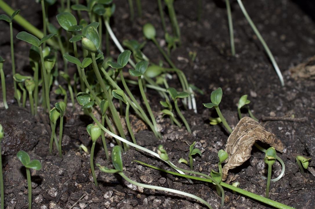 Living Soil, As Nature Intended