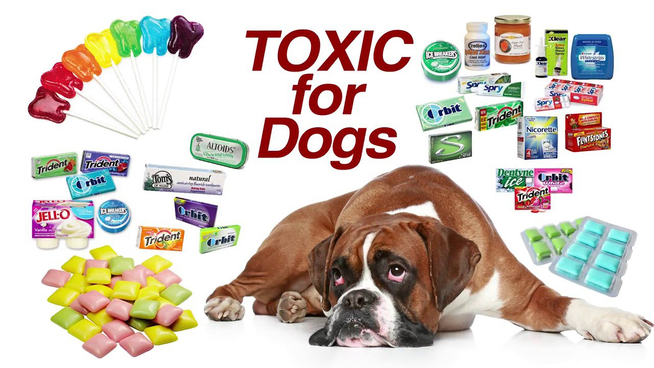 THE NOT SO SWEET TRUTH ABOUT ARTIFICIAL SWEETENERS FOR DOGS