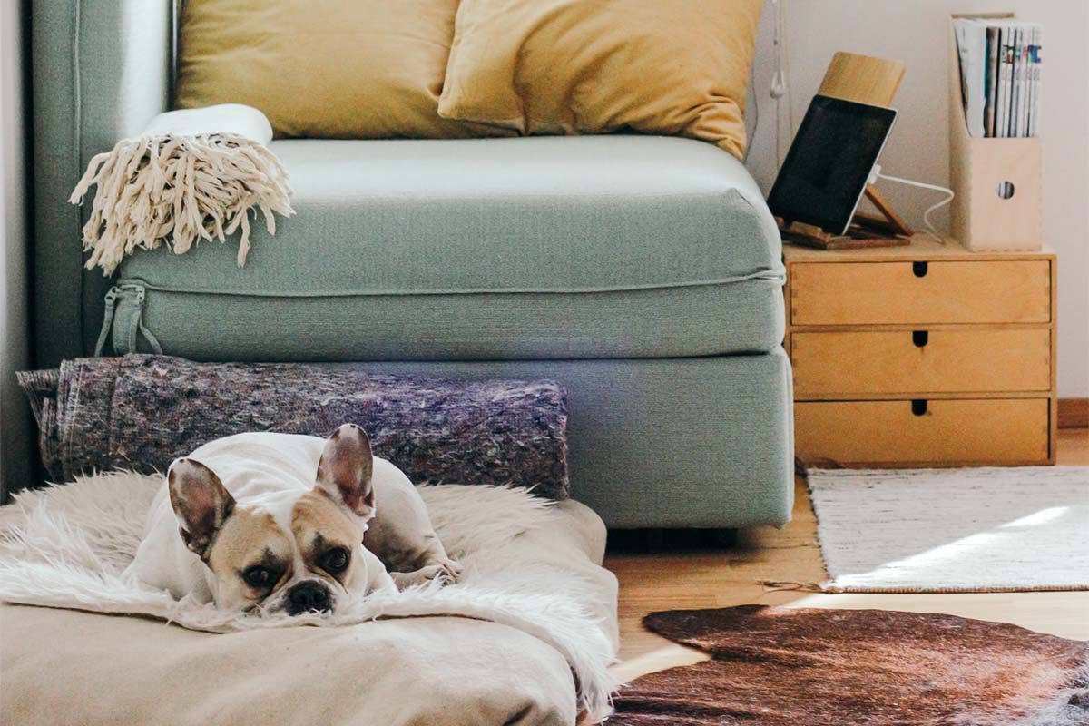 Dog laying on a dog bed in front of a couch