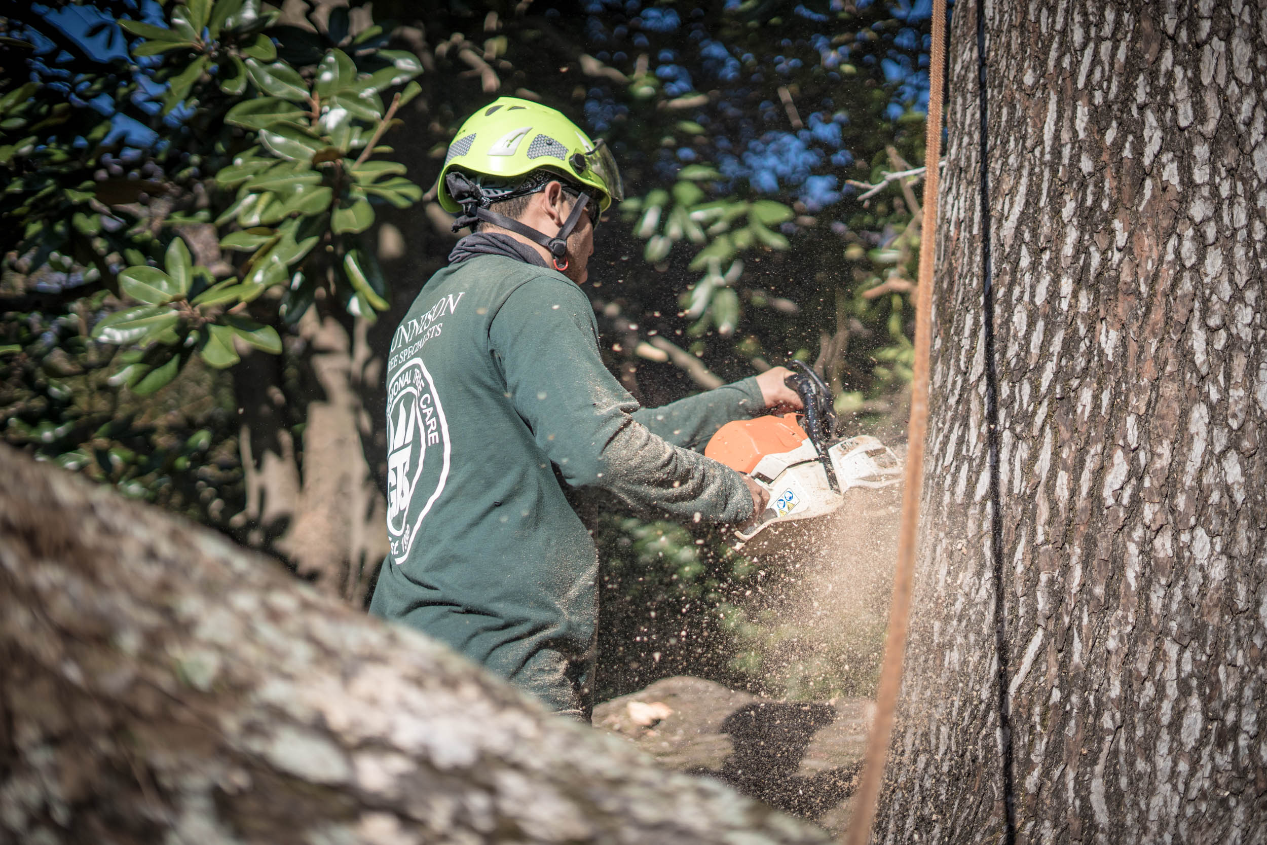 A Gunnison Tree Services employee uses a chainsaw on a large tree.