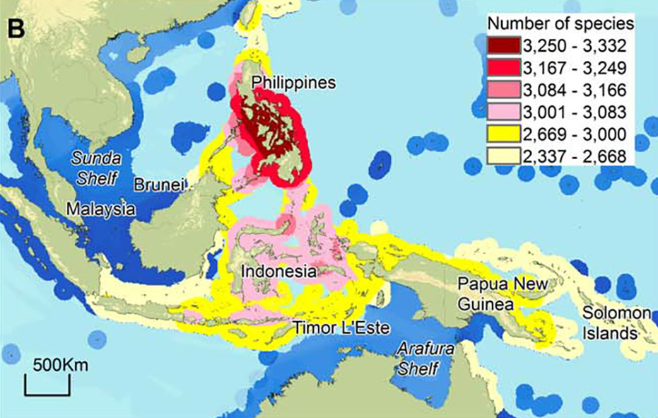 Concentration of species in the coral triangle with Philippines as center