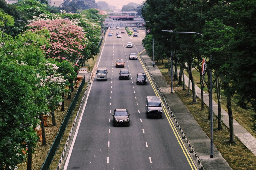 Visão aérea de avenida arborizada em cidade com carros transitando
