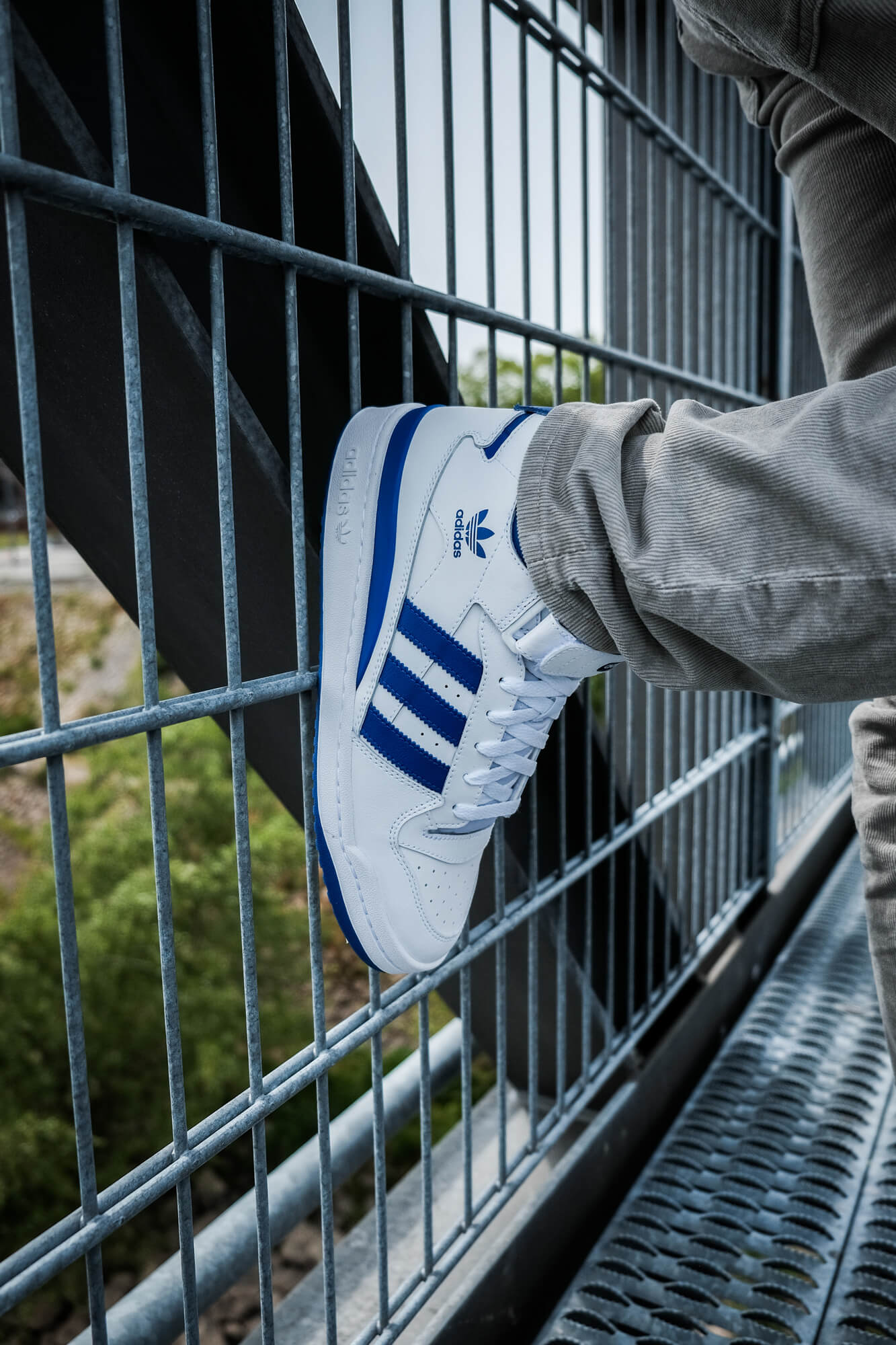 on feet photo of the adidas Forum Mid - cloud white/royal blue/cloud white - FY4976