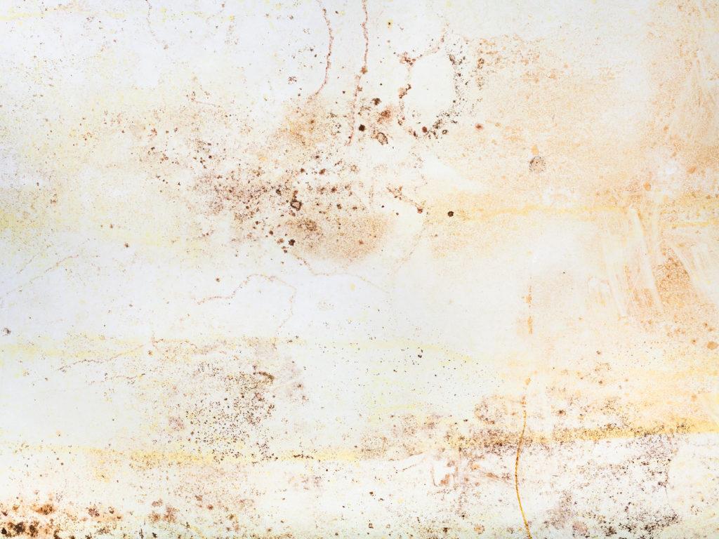 mold common allergies