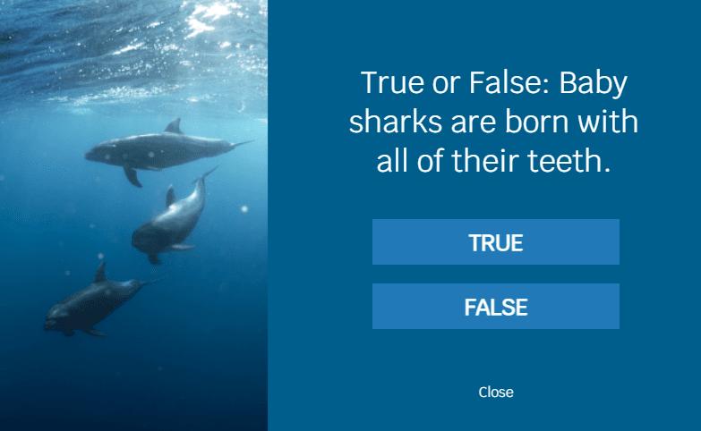 shark trivia quiz pop-up