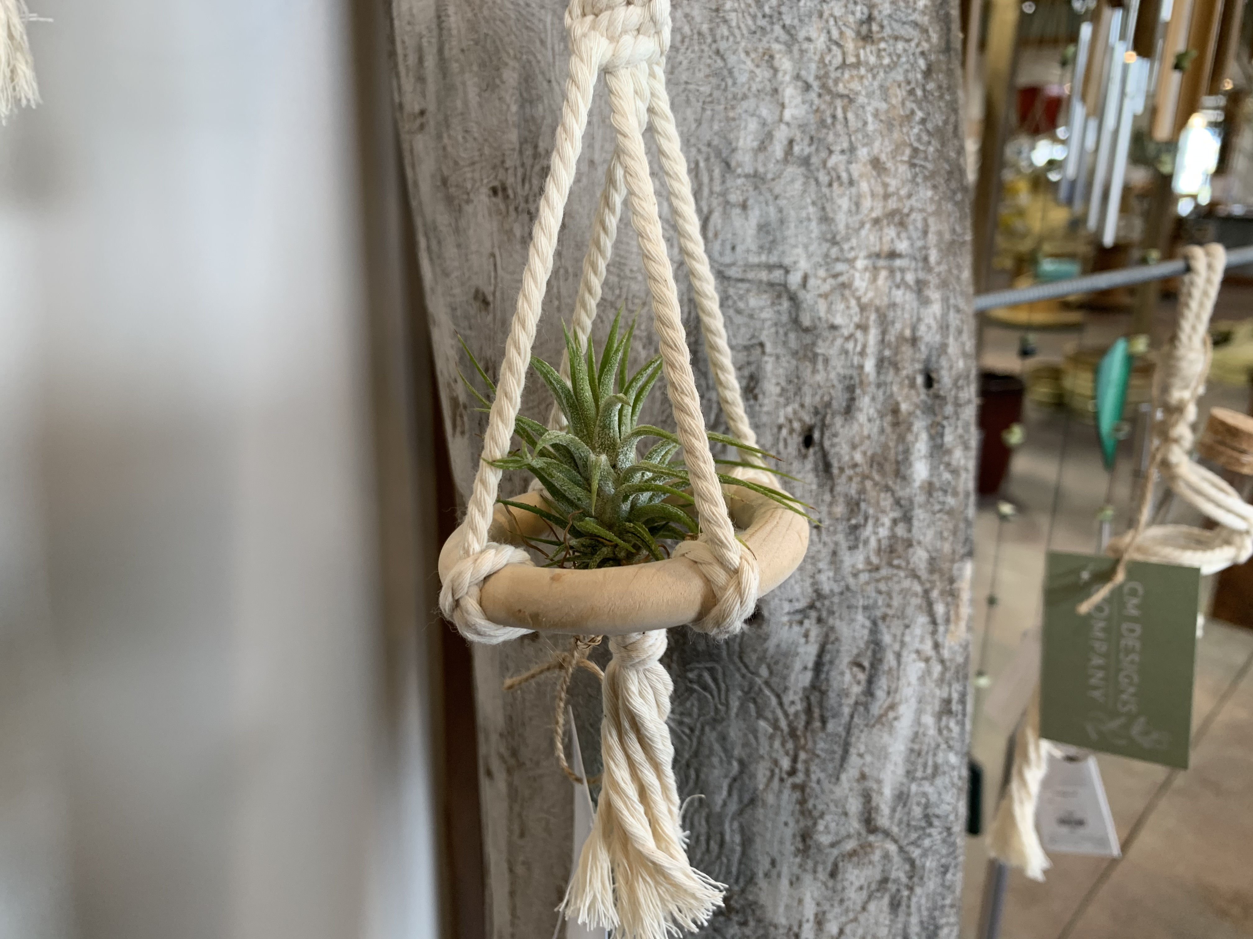 Air plants with hangers.