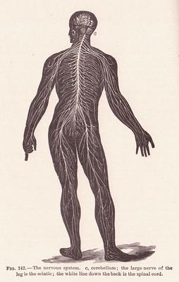 page 214 Nervous System