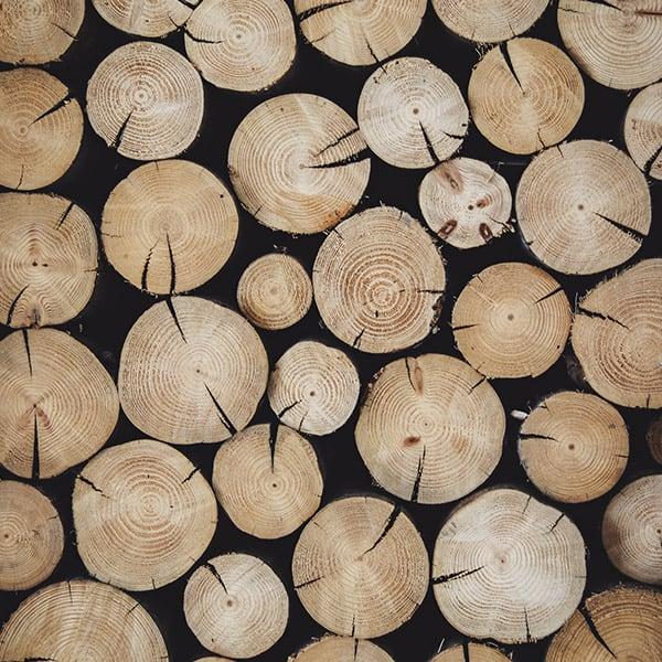 Nachhaltig und effizient bindet die SCALA Klimawand in Holzriegelbauweise CO2