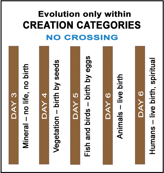 Graph of God's six day creation categories