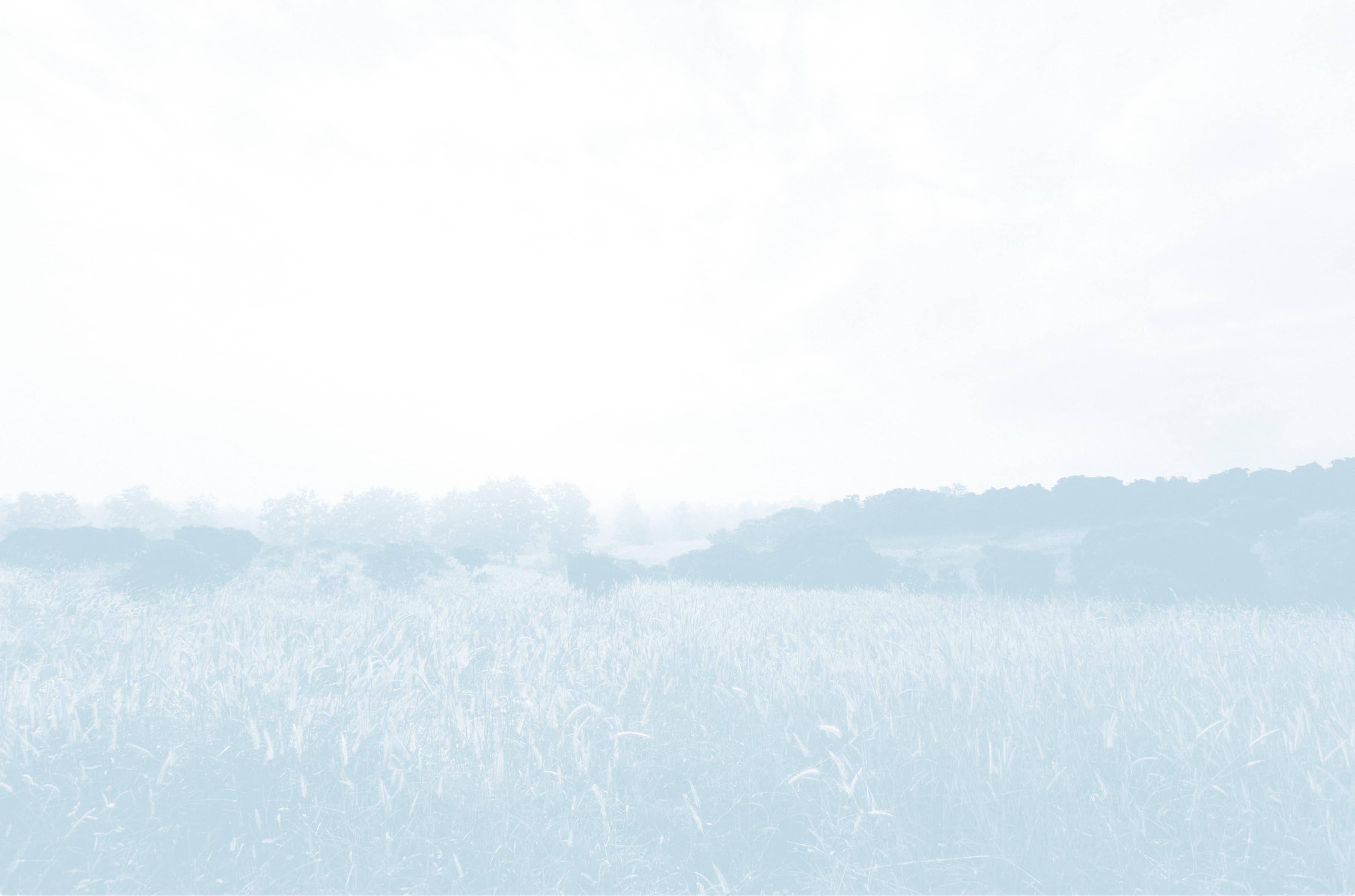 Medium shot of a grassy savannah.