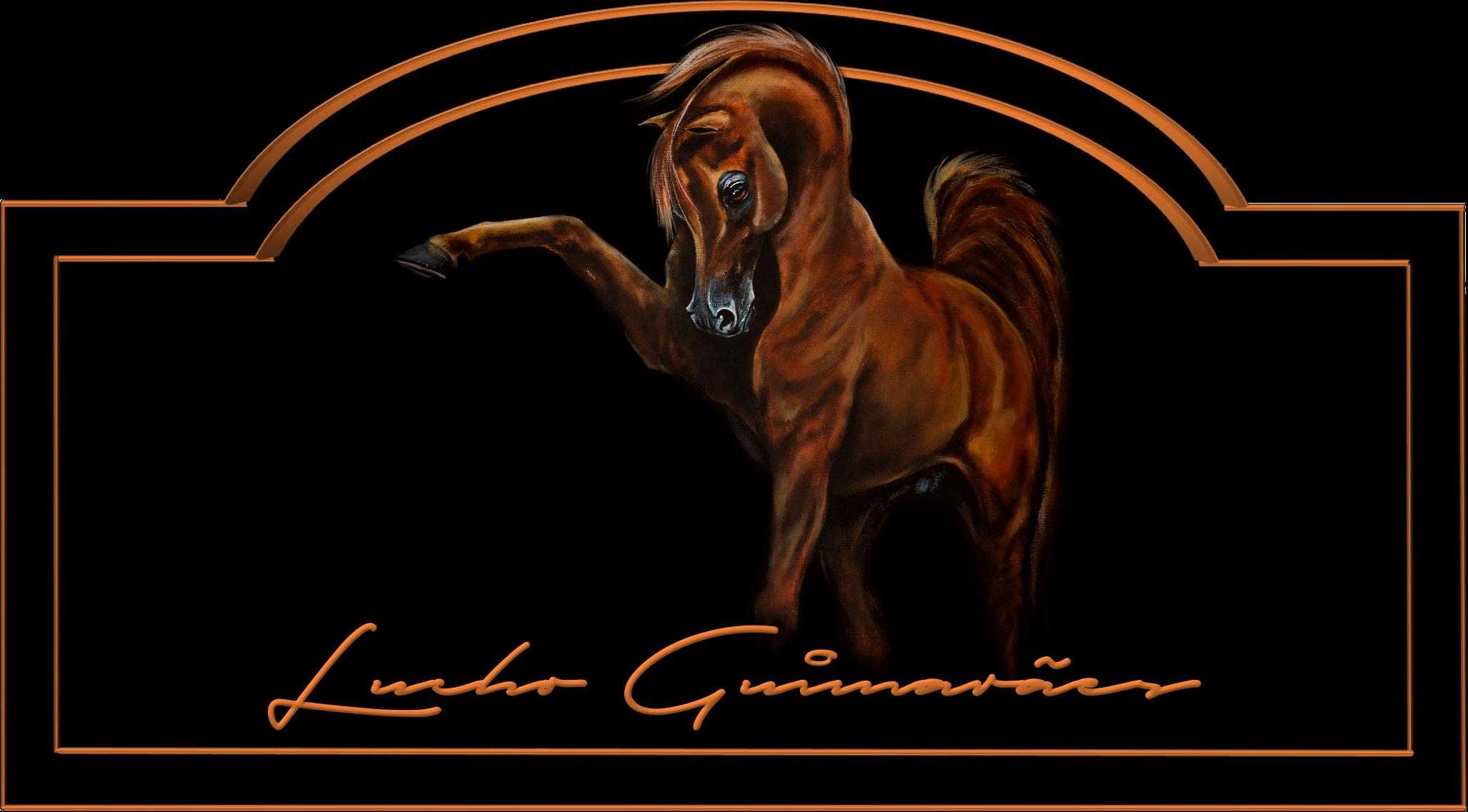 Lucho Guimaraes Arabians
