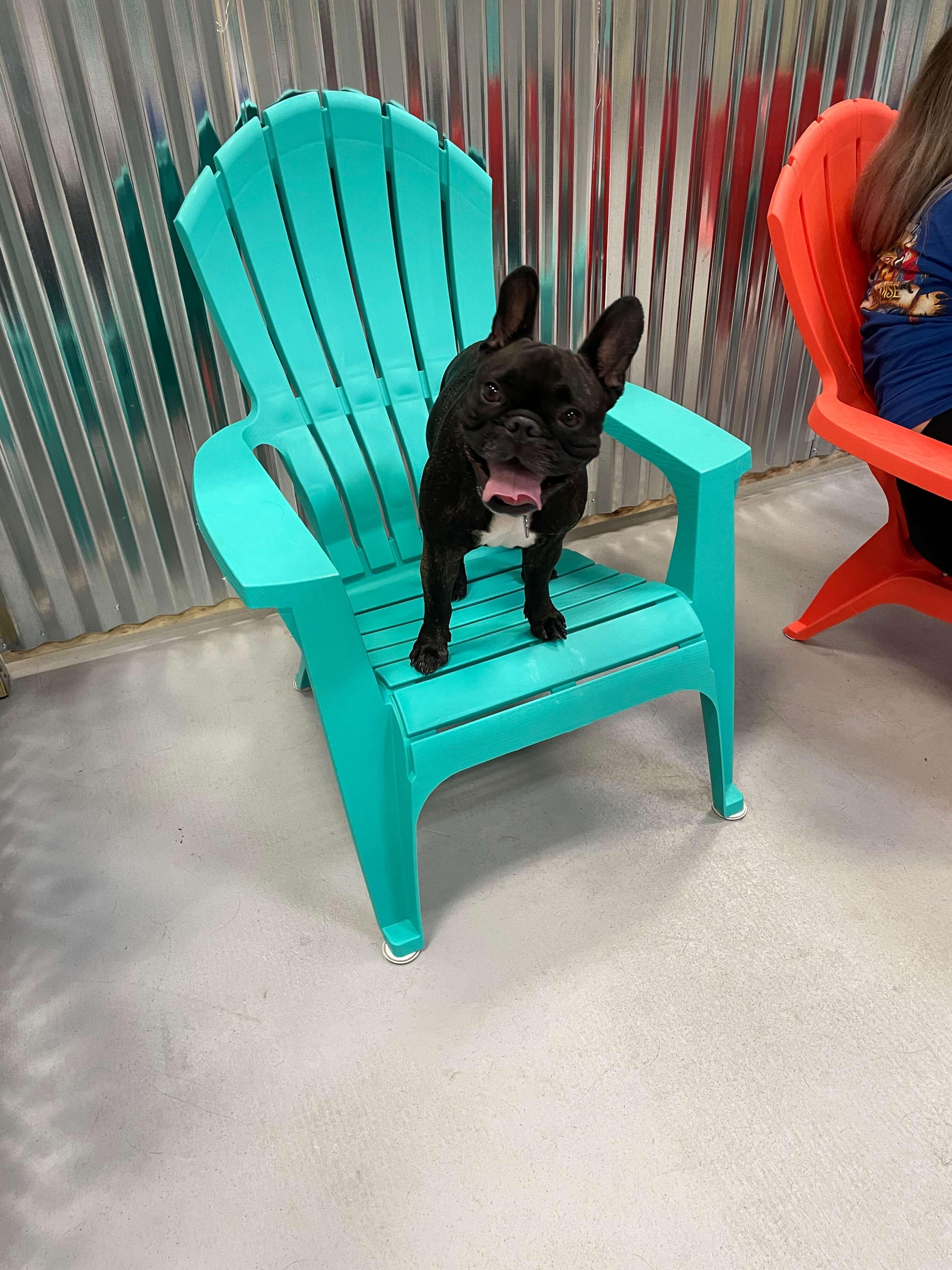 ruff houz bark park dog on chair