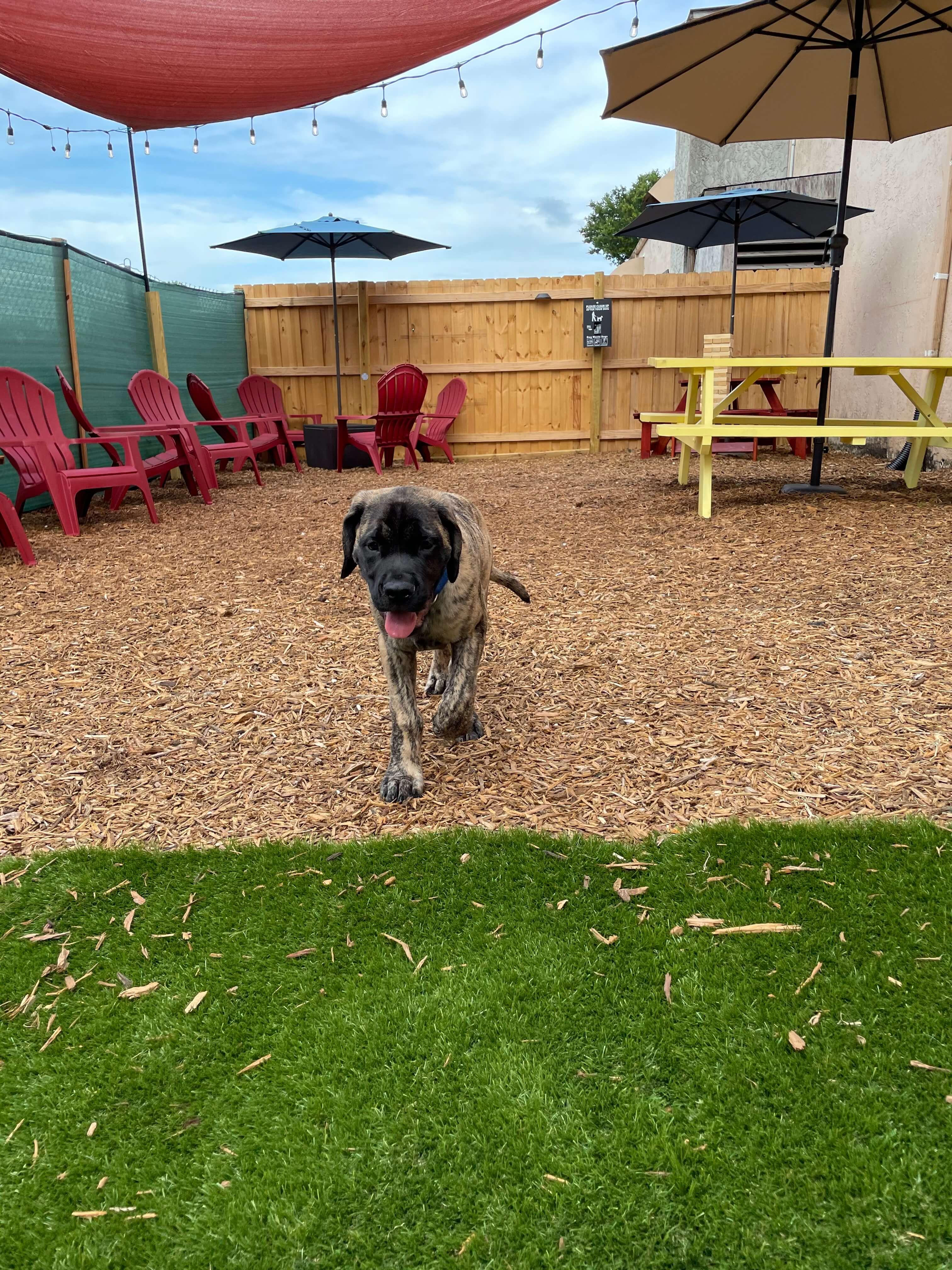 ruff houz bark park outdoors