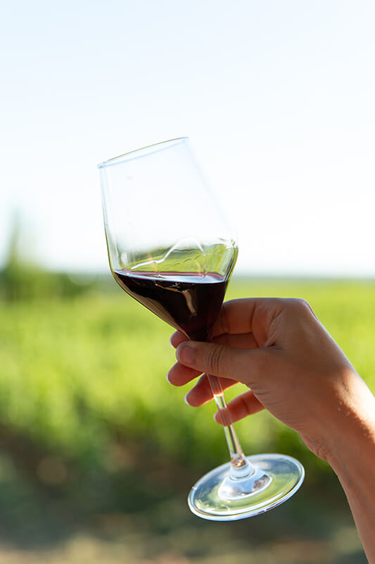 La dégustation du vin avec la vue