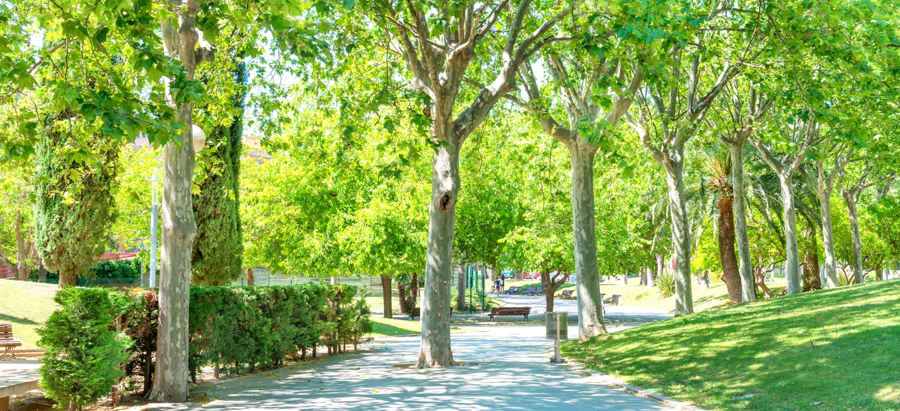 Trees in park.