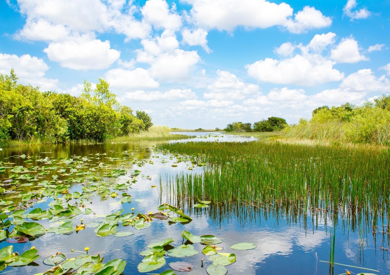 Everglades Lilly pads grass.