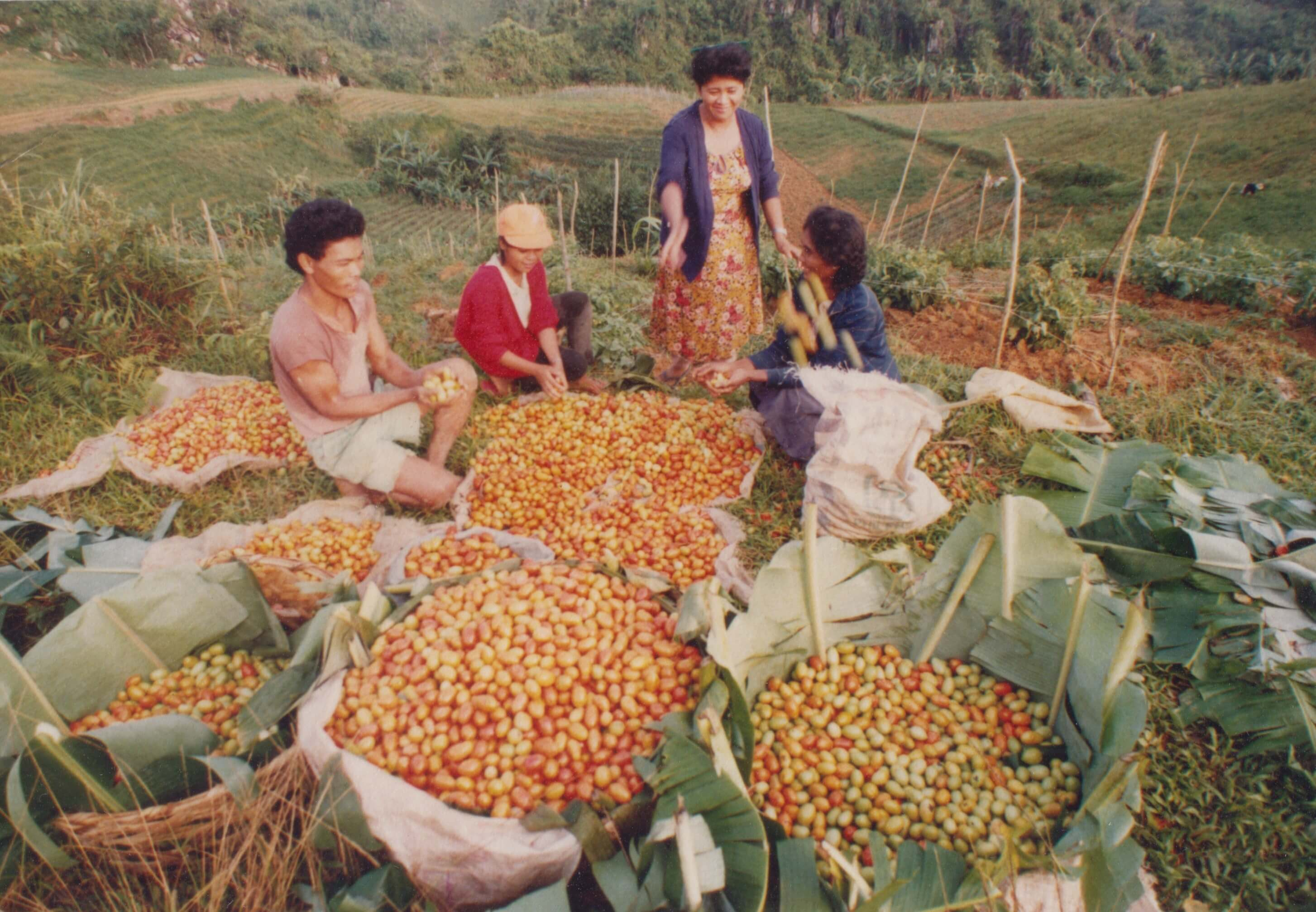 1991 Reaping the Harvest