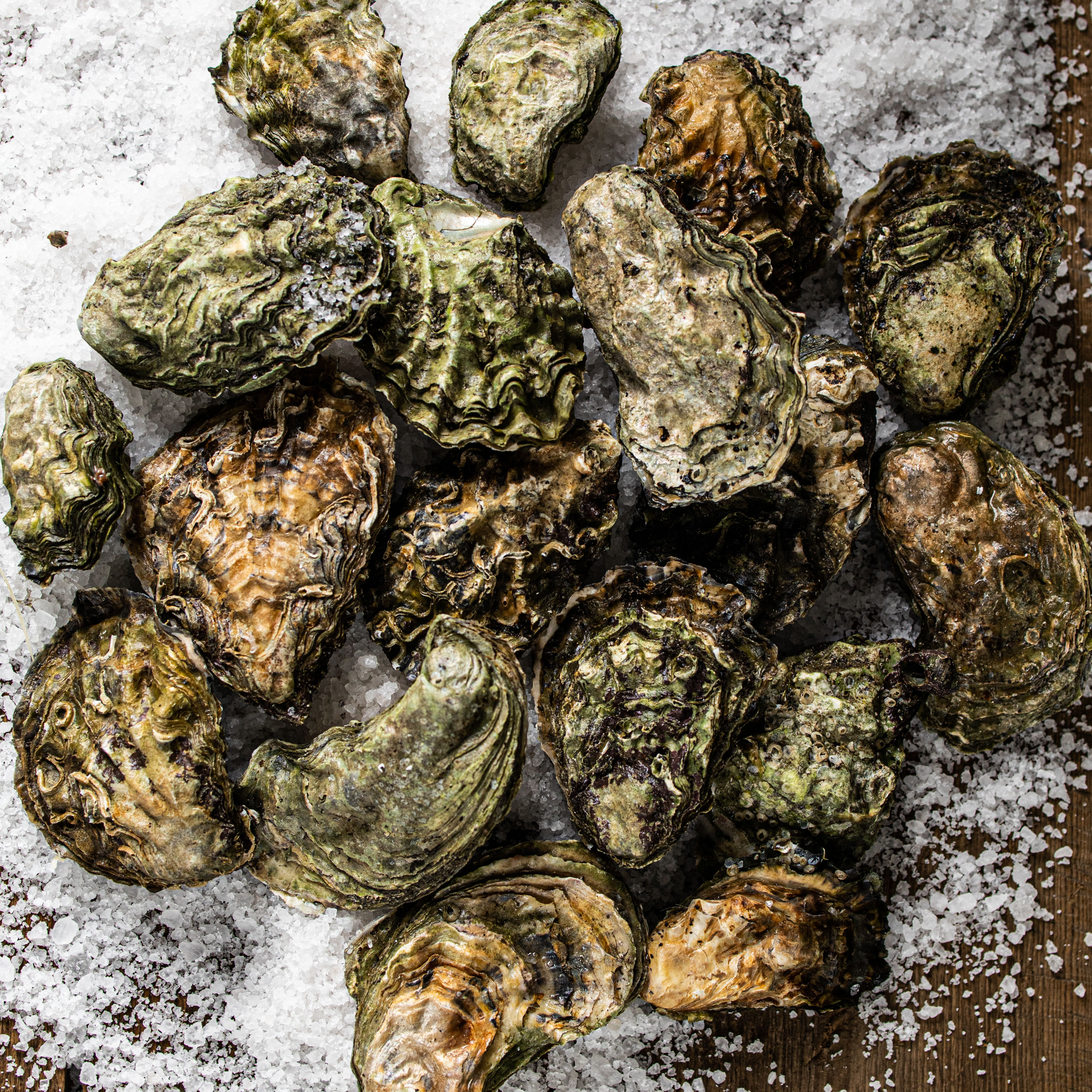 shores_oysters_photo
