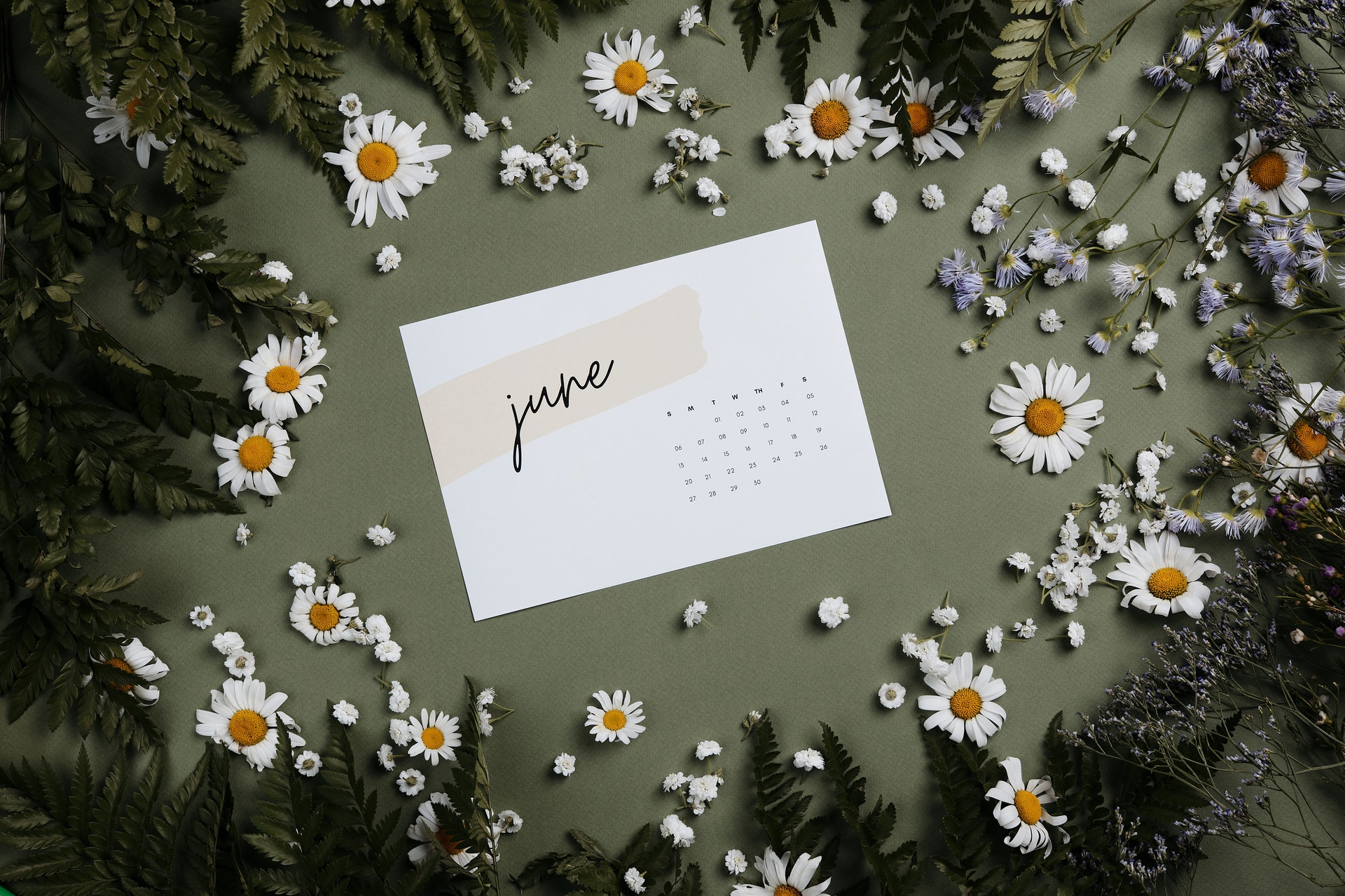 The word 'June' is written on a white piece of paper, laying on a green background surrounded by daisies and leaves. Photo by Boris Pavlikovsky from Pexels
