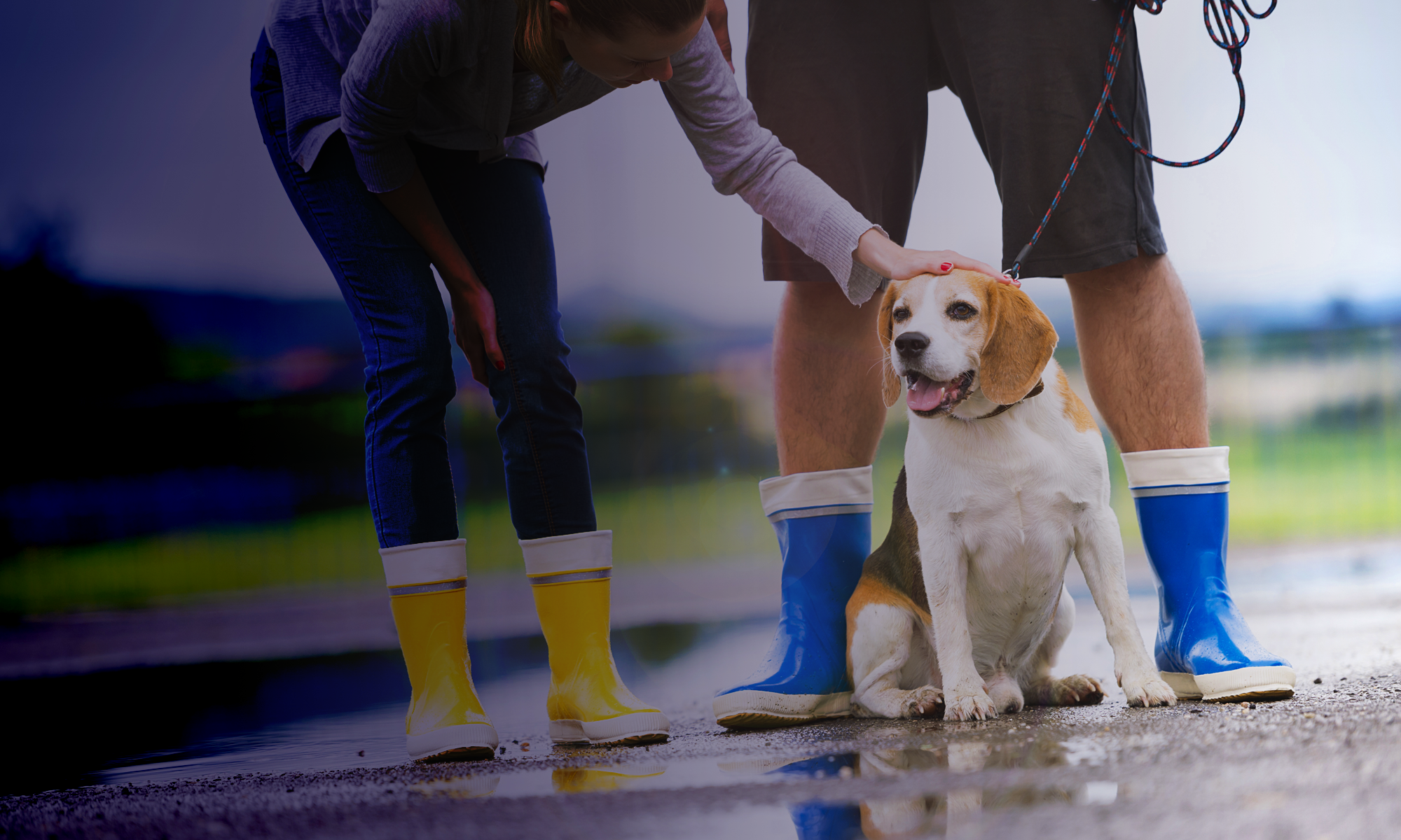 What Do Zoom, Dog Walkers, And Encryption Have In Common?