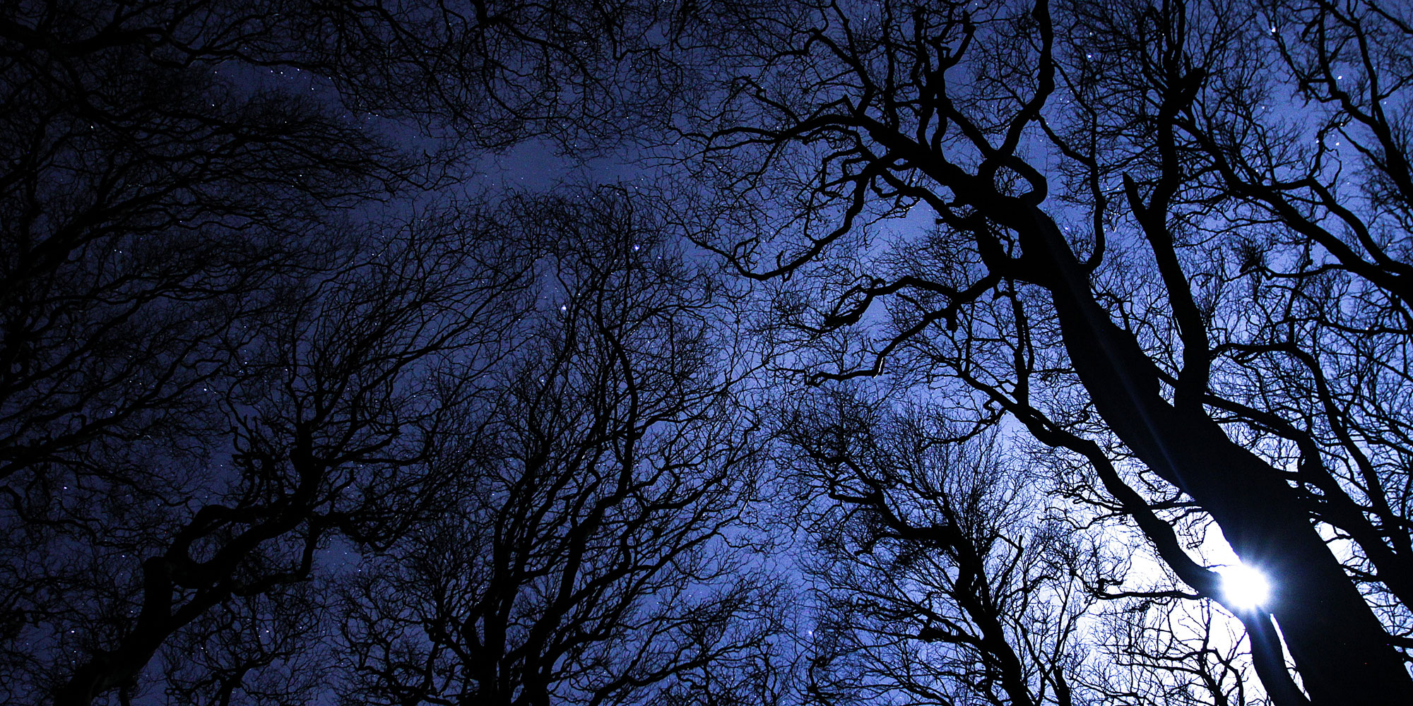 Night trees, stars and moon