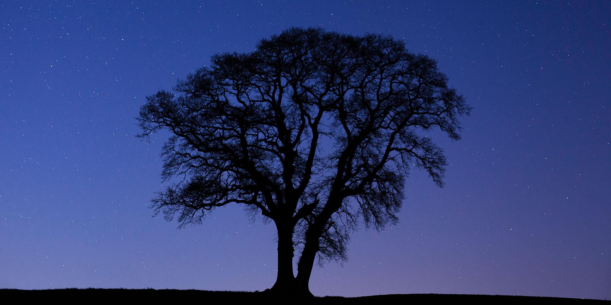Oak silhouette and stars