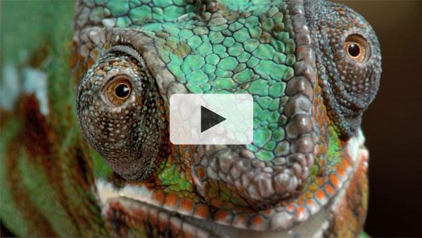 Chameleon - Sony Commercial
