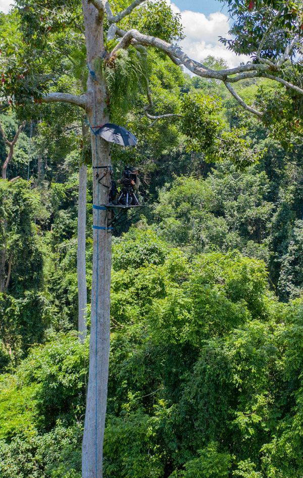 Graham Hatherley filming on a platform in a rainforest canopy
